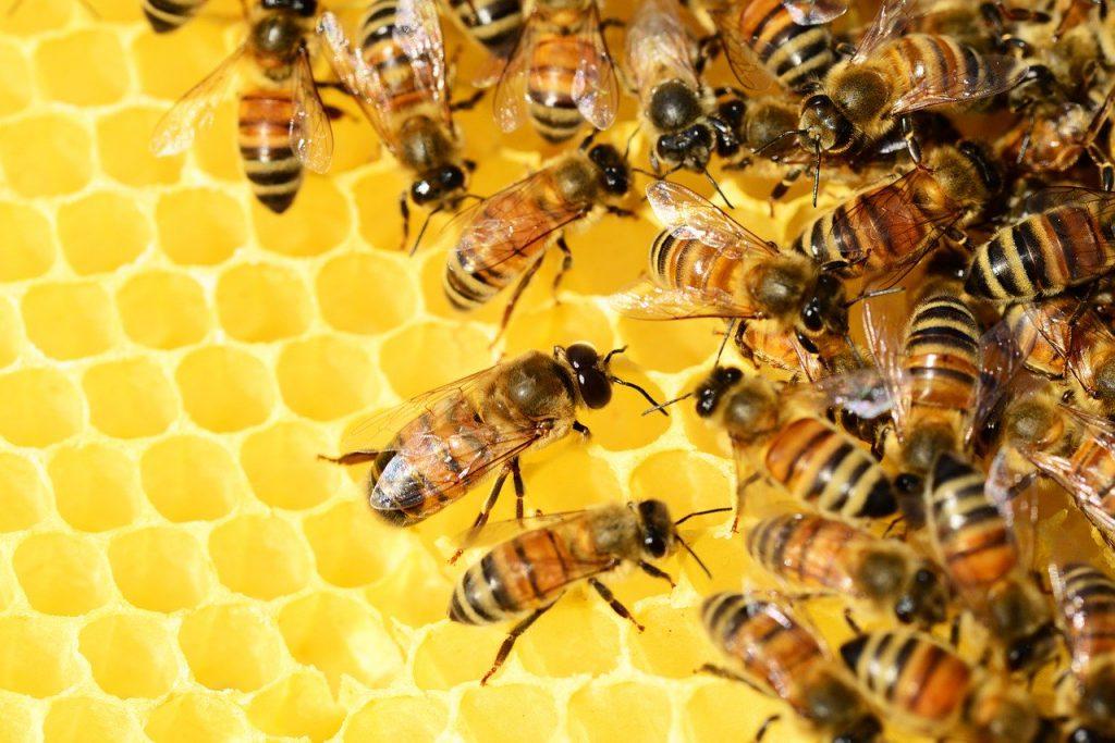 api producono miele